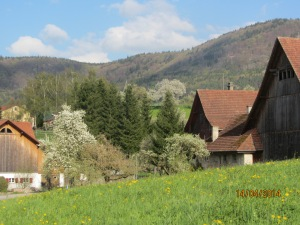 The village is shrouded in blossoms - Beggingen, Switzerland (I live in Schleitheim, next door)
