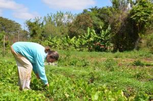 Annemieke is passionate about her organic market garden.