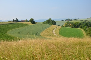 It's true - the many colours of different crops make for a rich landscape.