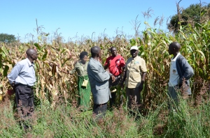 Burundi farmers, like these in Zambia, are dependent on timely information to make good farming decisions.