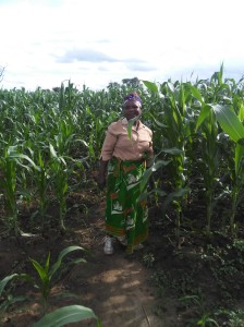 Vivienne standing in midst of a beautiful corn crop, beginning January, 2016